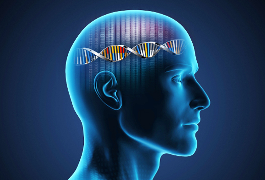 Our Brain and DNA